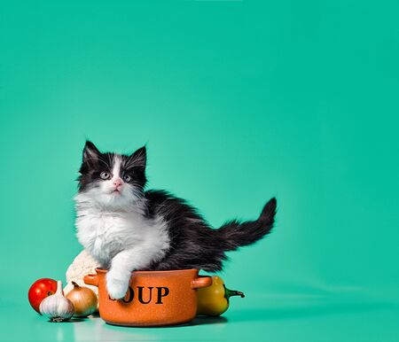 cooking black and white fluffy little kitten next to an orange bowl with soup and vegetables