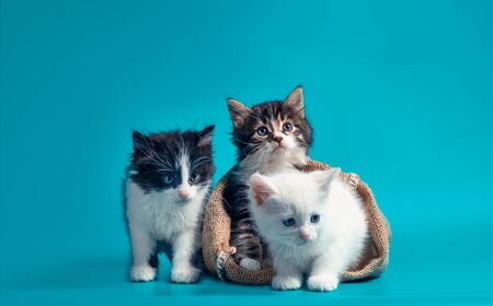 two kittens in a sack and one next to the bag on a turquoise background Stok Fotoğraf