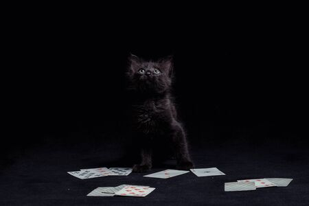 black kitten with playing cards against a dark background