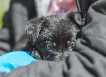 pet care portrait of a black puppy mongrel in the arms of a man Foto de archivo