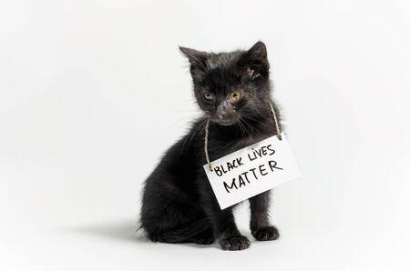little dark kitten with the slogan black lives matter on white background isolated
