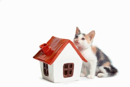 adoption of a tricolor kitten next to a little house with a red roof on white background