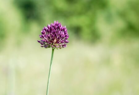 single blooming wildflower nature summer natural background Stok Fotoğraf - 149776250