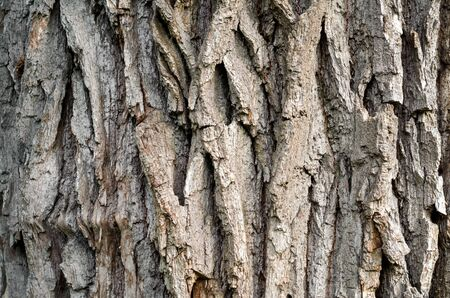 trunk of an old tree background pattern texture close up Stok Fotoğraf - 149776135