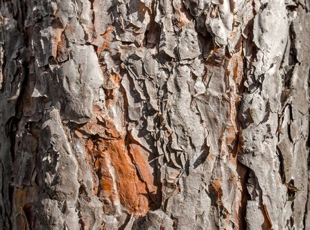 trunk of an old tree background pattern texture close up Stok Fotoğraf - 149777351