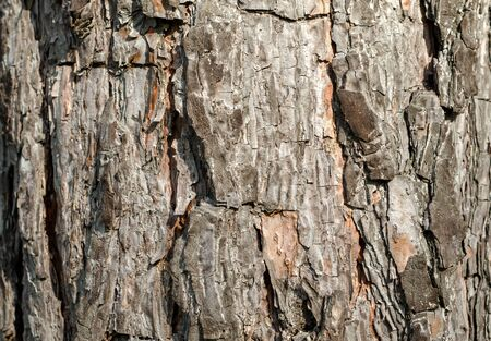 trunk of an old tree background pattern texture close up