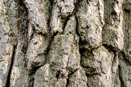 trunk of an old tree background pattern texture close up Stok Fotoğraf - 149777139