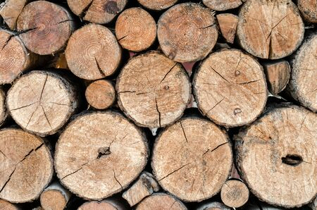 many wooden logs trunks natural nature background pattern texture Stok Fotoğraf - 149777444