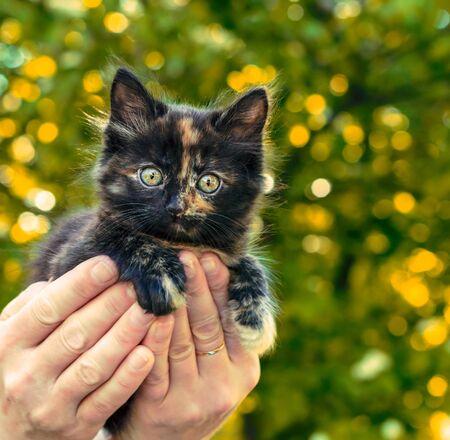 little motley kitten in female palms on a background of green foliage Stok Fotoğraf - 149965661