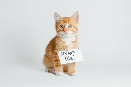 cute ginger kitten with a sign adopt me on his neck on a light background Stok Fotoğraf