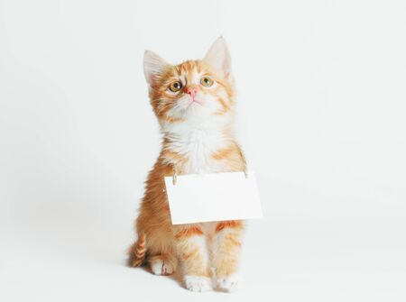 ginger kitten with blank sign on his neck looks up on a light background