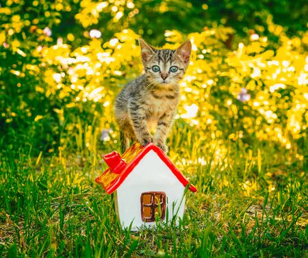 tabby kitten in the green grass standing on to the toy house with red roof Stok Fotoğraf - 150036152