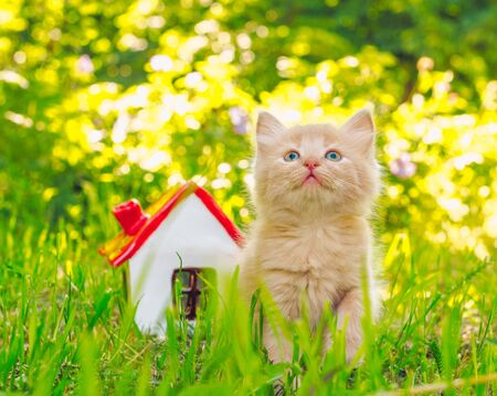 gingerly red kitten in the green grass next to the toy house with red roof Stok Fotoğraf