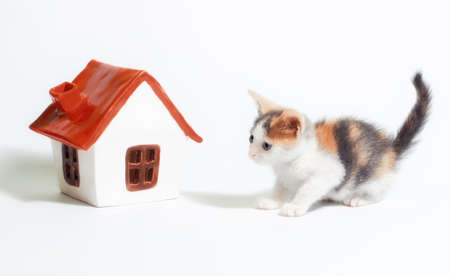 adoption of a tricolor kitten next to a little toy house with a red roof on white background