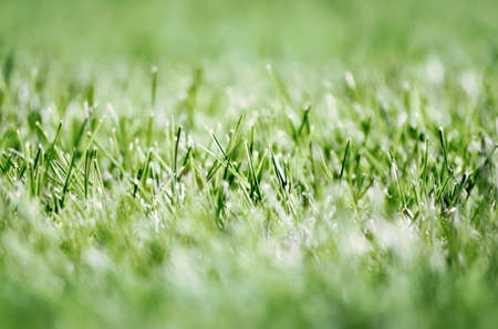 green fresh grass lawn close up nature background pattern summer