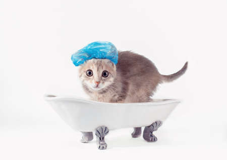 grooming gray kitten in a blue shower cap scared in a toy white ceramic bath on silver legs Stock Photo