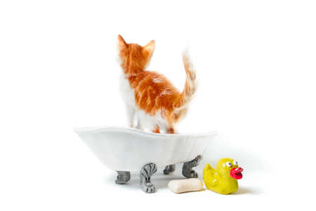 small ginger kitten in a vintage bath with a yellow duck on a white background isolated studio shot
