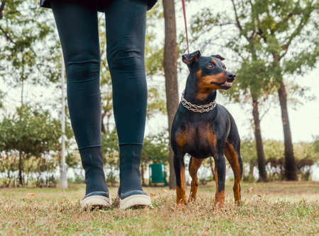 girl walking with pinscher dog in the park in the afternoon in autumn