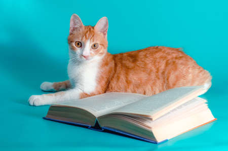 red cat and a book on a light background studio shot
