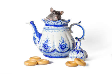 Russian tea party rat inside gzhel teapot, bagels on a white background