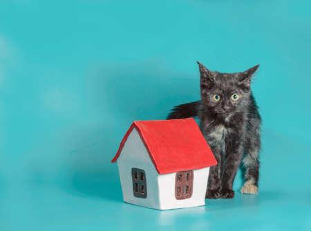 adoption piebald kitten next to a toy house on a turquoise background Stok Fotoğraf