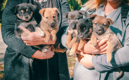 two women in gray clothes with armfuls of mongrel little puppies