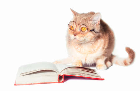 red cat in glasses with a book on a white background closeup