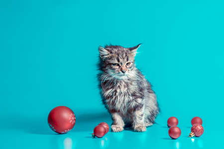 joyless holiday disgruntled kitten with christmas balls on a turquoise background