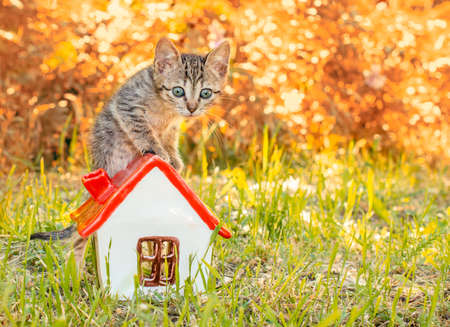 tabby kitten in the green grass standing on to the toy house with red roof Stok Fotoğraf