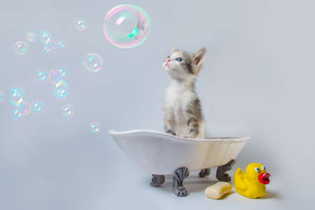 grooming tabby kitten looks at soap bubbles in a toy bathtub next to a bar of soap and a yellow rubber duckie