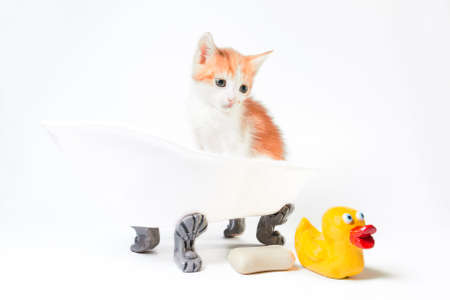 grooming red and white kitten sits in a toy bathtub next to a bar of soap and a yellow rubber duckie