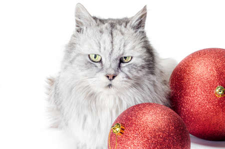 gray tabby angry cat next to christmas balls on a white background Stok Fotoğraf