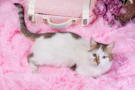 flat lay white with spots cat on pink artificial fur with a decorative suitcase and a bouquet of flowers in a wicker basket on a coral background
