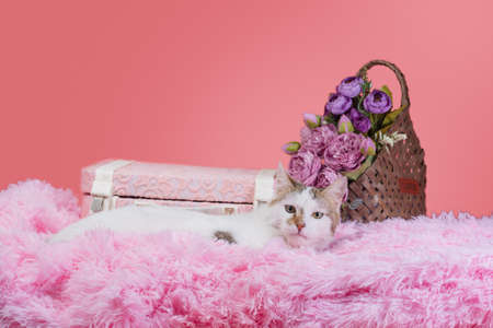 adult white with spots cat on pink artificial fur with a decorative suitcase and a bouquet of flowers in a wicker basket on a coral background