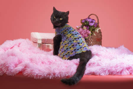 adult black cat on a pink background with flowers and a suitcase