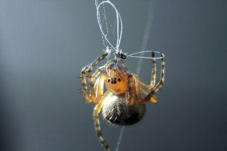 microcosm: a spider spining a cobweb