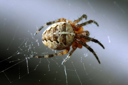 microcosm: a spider on a web