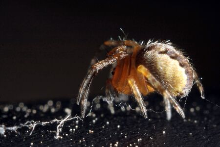 microcosm: going spider on a black background Stock Photo