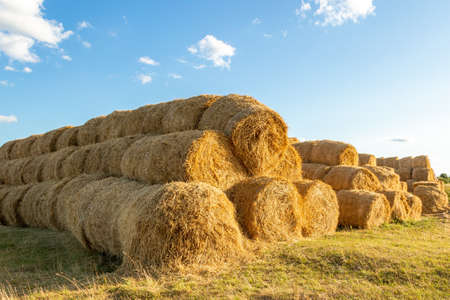 Yellow straw packed in coils, blue sky on the background