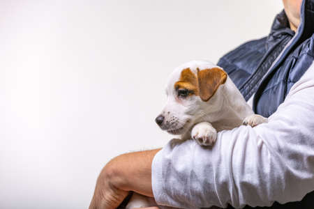 Horizontal portrait of handsome cheerful man holds jack russell terrirer, has glad expression