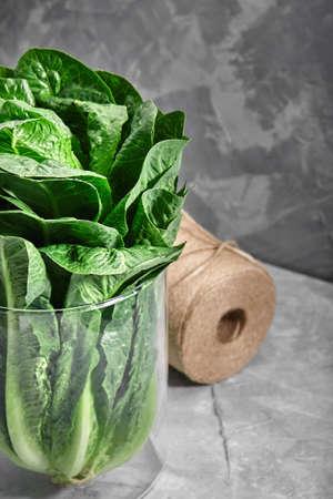 lettuce or romano salad, salad leaves lettuce bush, green crop petals, vitamins Roman salad, Batavia menu concept. food background. copy space