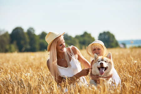 Cute baby girl with mom and dog on wheat field. Happy young family enjoy time together at the nature. Mom, little baby girl and dog husky resting outdoors. togetherness, love, happiness concept. Banco de Imagens