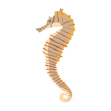 Vector illustration of a colorful seahorse Illustration
