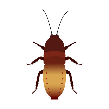 disgusting animal: Vector colored cockroach