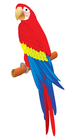 Vector image. Red beautifull parrot on white