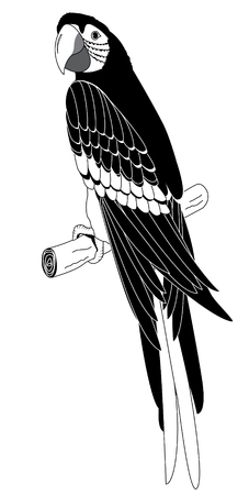 macaw: Vector parrot.Graphic image