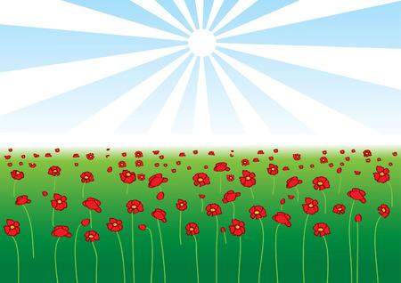 poppy field: Campo de vector de amapola en un d�a de sol
