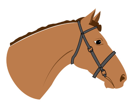 head of horse on white  Illustration