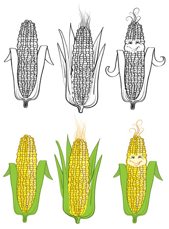corn on white. Vector