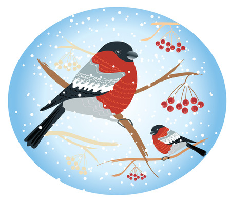 bullfinches on branches in winter .New year card Vector